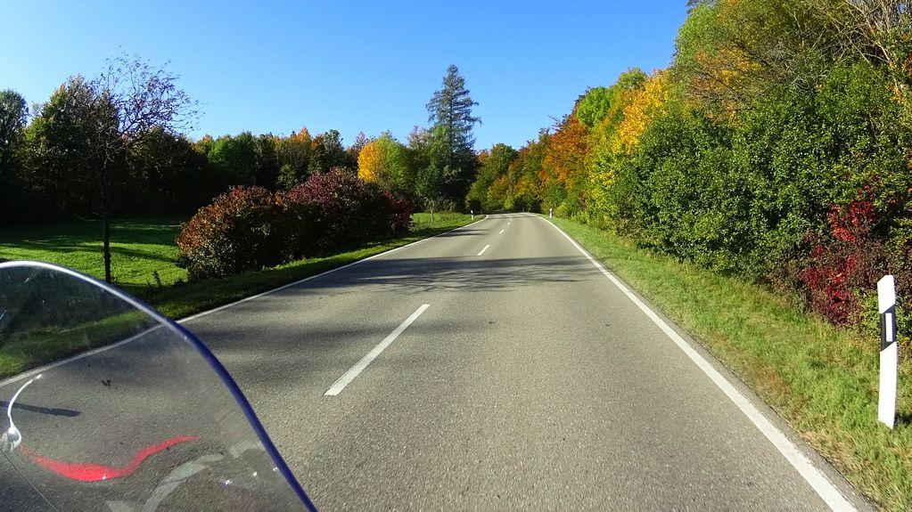 Herbstlicher Wald im Oberen Donautal