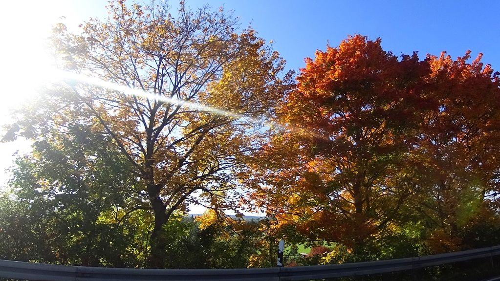 Lichtspiel im Herbstwald